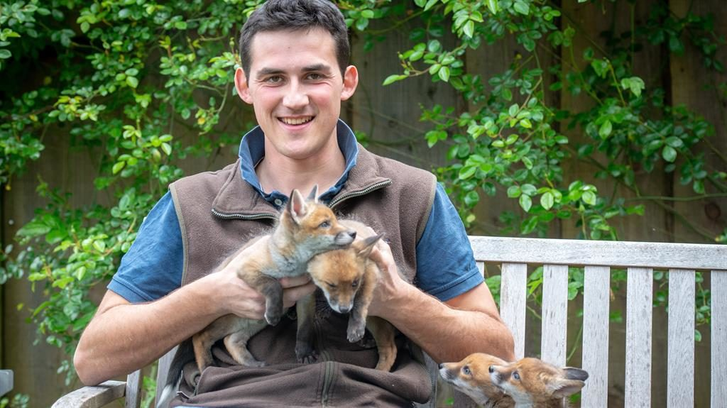 Four foxes' sake: Chris Rolfe with the cubs he saved after carrying out an emergency Caesarean on the dead vixen PICTURE: SWNS