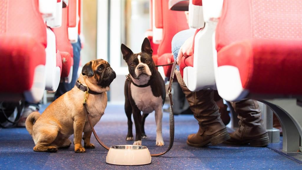 Dog train-ing: Butch Cassidy and Sacha travel with East Midlands Trains PICTURE: PA