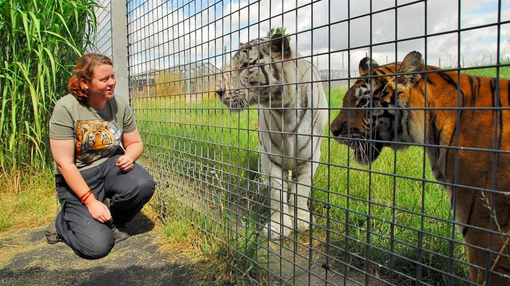 Experienced: Rosa King with tigers at Hamerton zoo where she was mauled to death. She had worked there 13 years PICTURE: SWNS