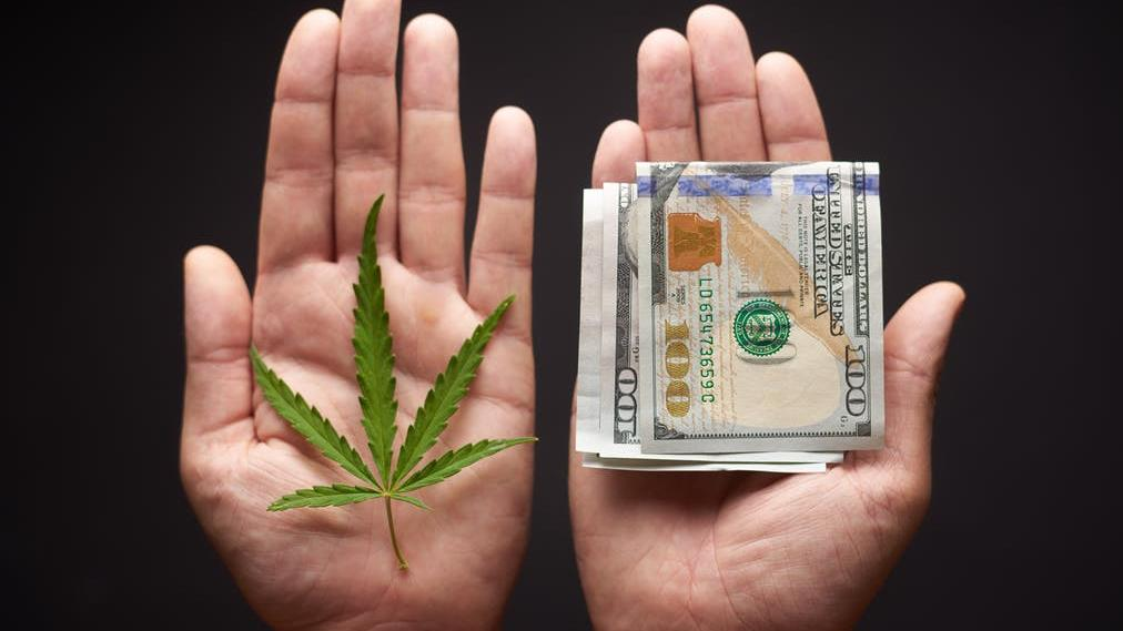 Profit: There's money to be made from legalising cannabis PICTURE: SHUTTERSTOCK