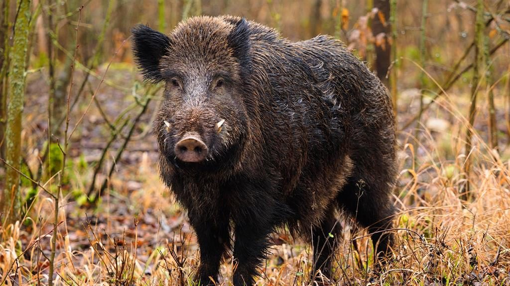 Italian hunter mistaken for boar shot dead by son