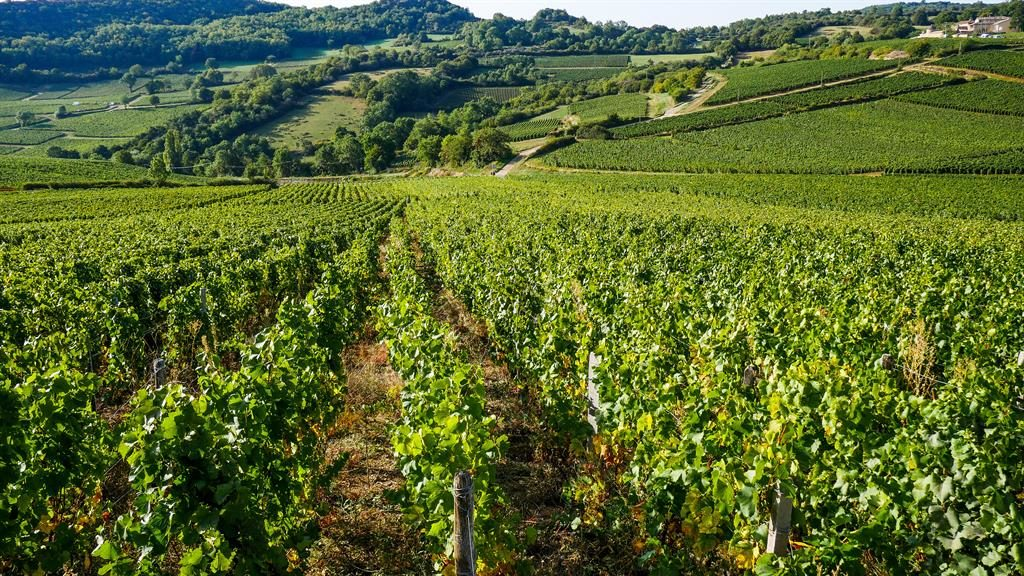 It's got legs: The Burgundy region produces some of the best wine in the world