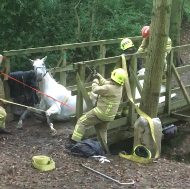 Gee, that's a close call: Fire crews haul Sam from bridge after the grey gelding crashed through rotten timbers