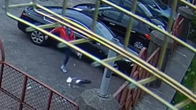 'Deliberate cruelty': Jones kicked the bird (below) around a library car park PICTURES: MEDIA WALES/WALES NEWS SERVICE