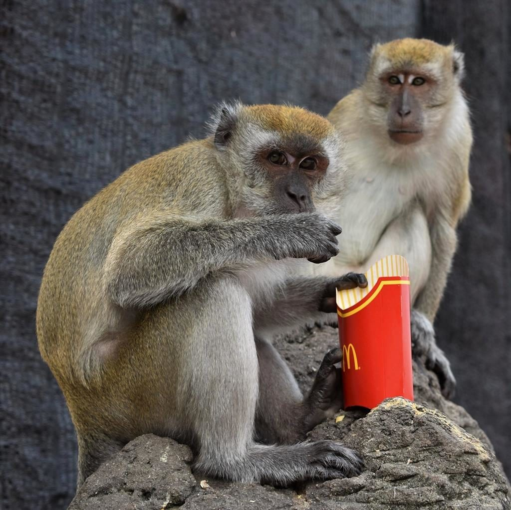 Save some for me! Macaques at tourist draw Batu Caves in Malaysia NIGEL TAYLOR