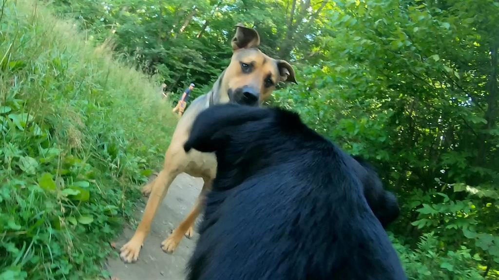 Paws to meet you: Roxy bumps into a friend while out for a walk PICTURES: SWNS