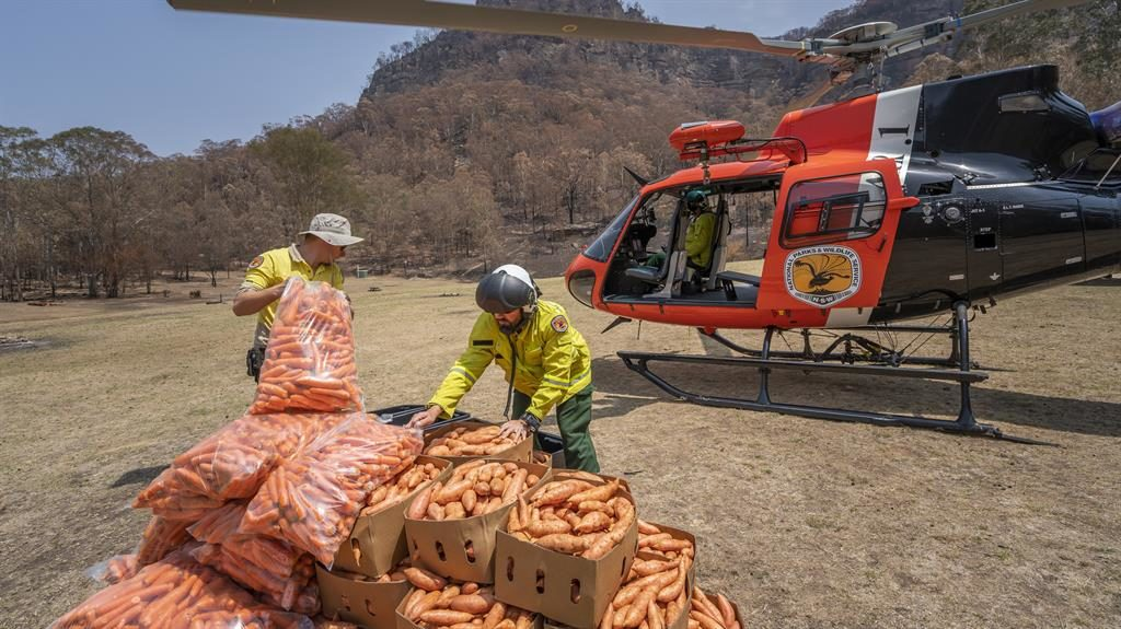 Operation Rock Wallaby: More than two tons of vegetables have been dropped to affected wildlife PICTURE: EPA