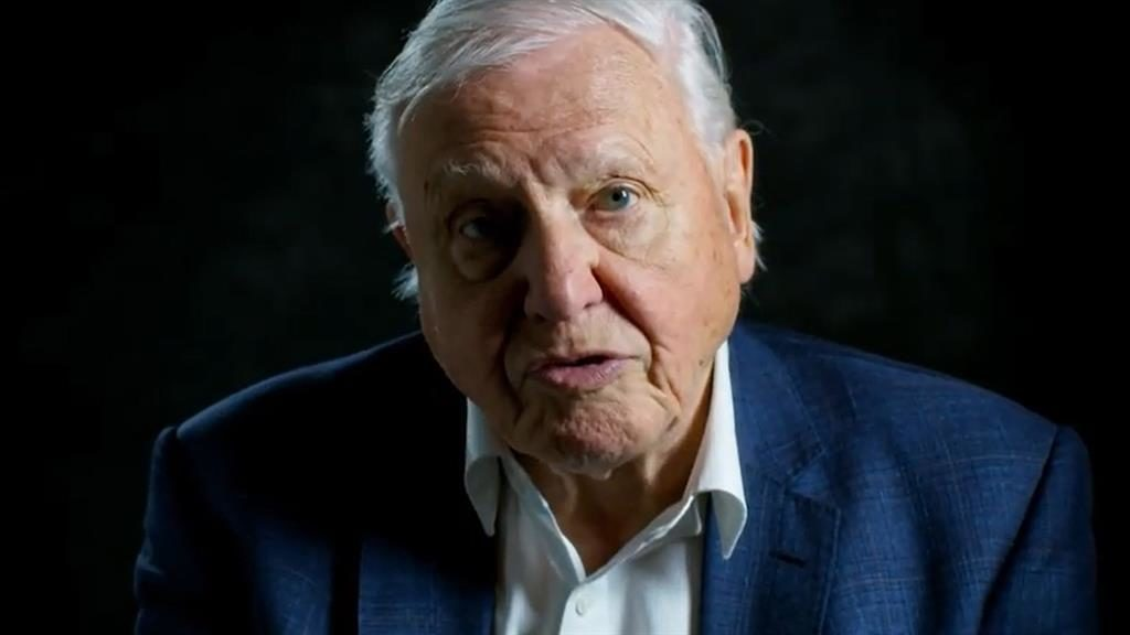 Sir David Attenborough warns that humans `have overrun the world'