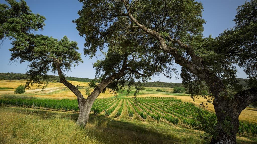 Vintage views: The Vino And Vinyasa retreat on the edge of the Sierra de Grazalema park in Andalucia