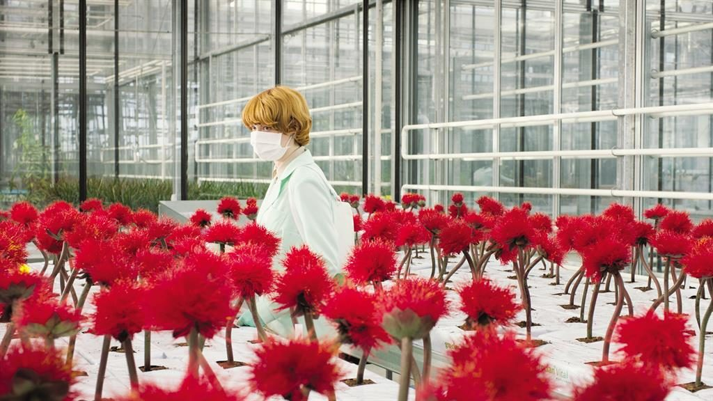 A day in the leaf: Emily Beecham as plant breeder Alice