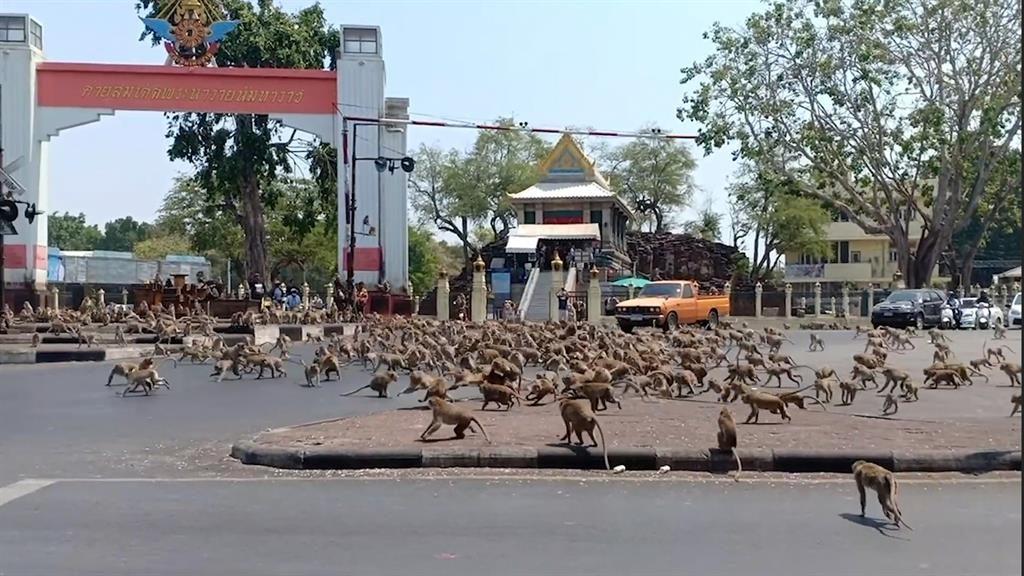 Watch as vicious brawl erupts between thousands of monkeys on Thai street