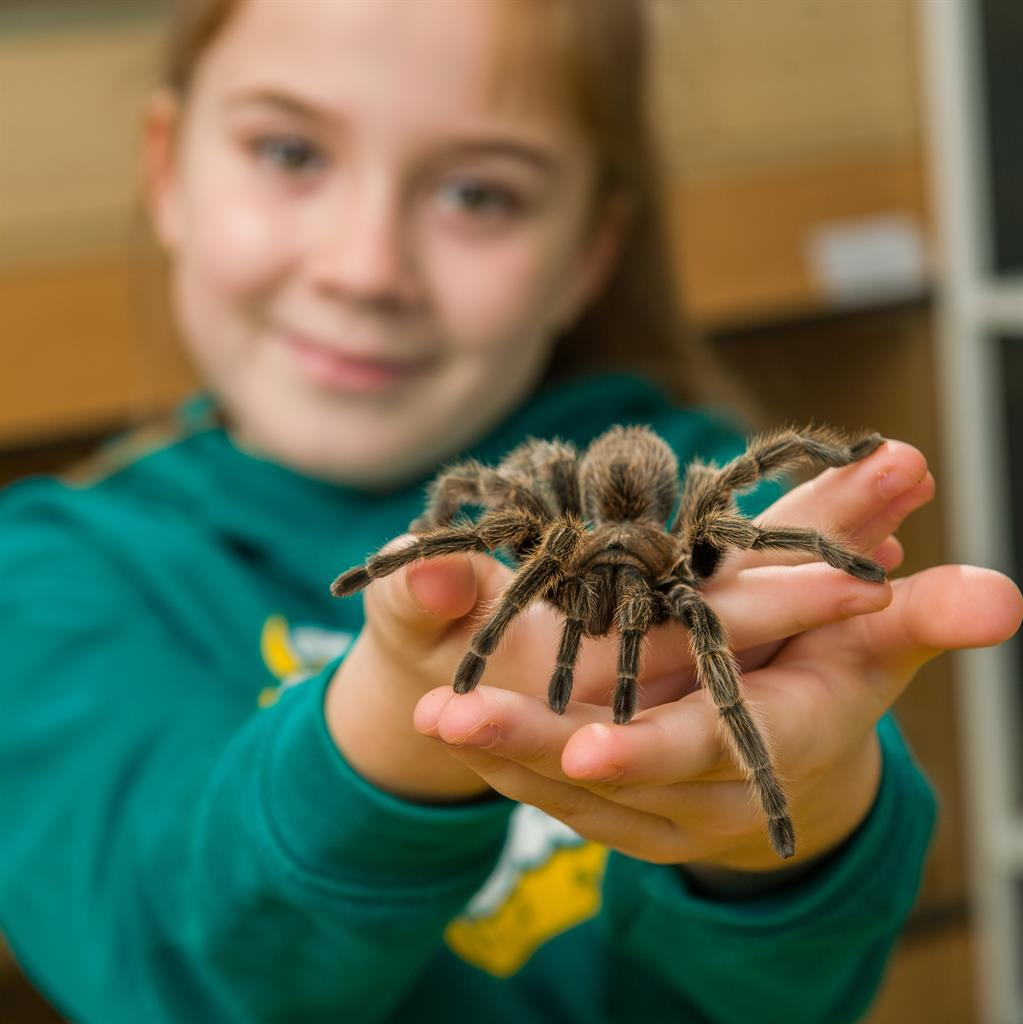 Spider girl: Hollie Greenhalgh with one of her tarantulas and (below) one of her pet snakes PICTURES: SWNS