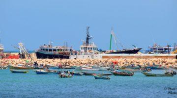Somalia : Hal milyan oo xoolo ah oo Sacuudiga loo dhoofinayo
