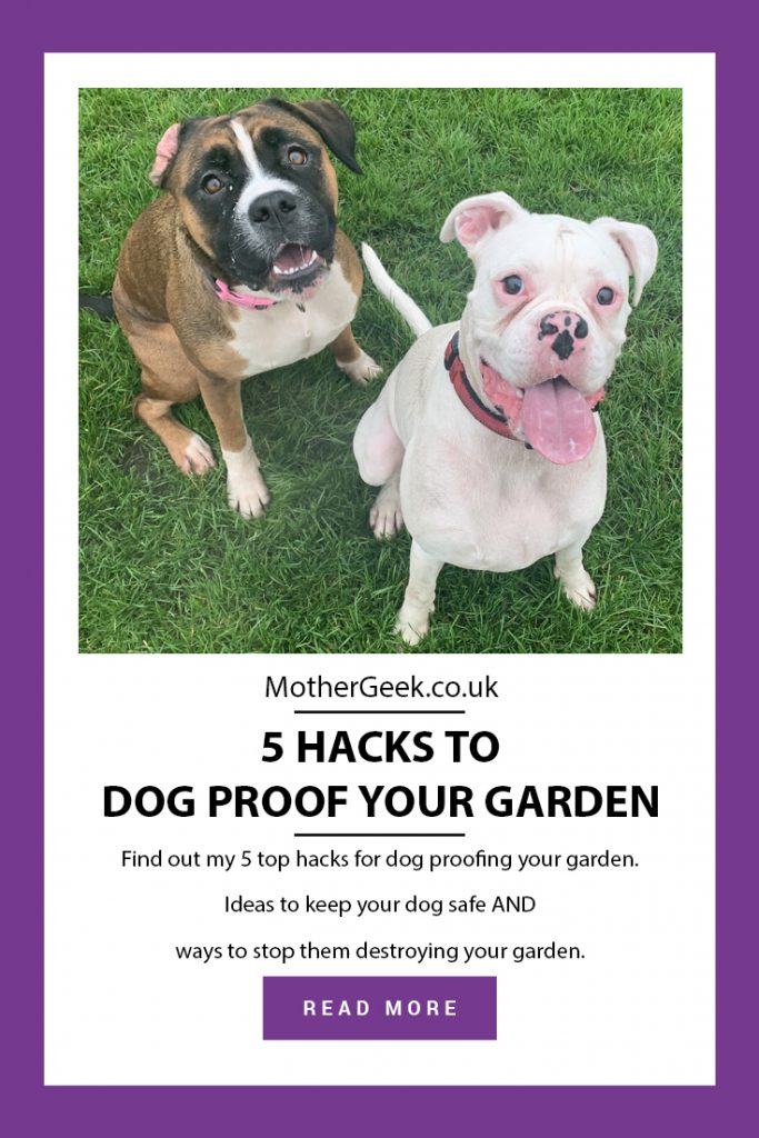 pinterest pin showing 2 boxer dogs sat on grass, and the text: 5 Hacks To Dog Proof Your Garden