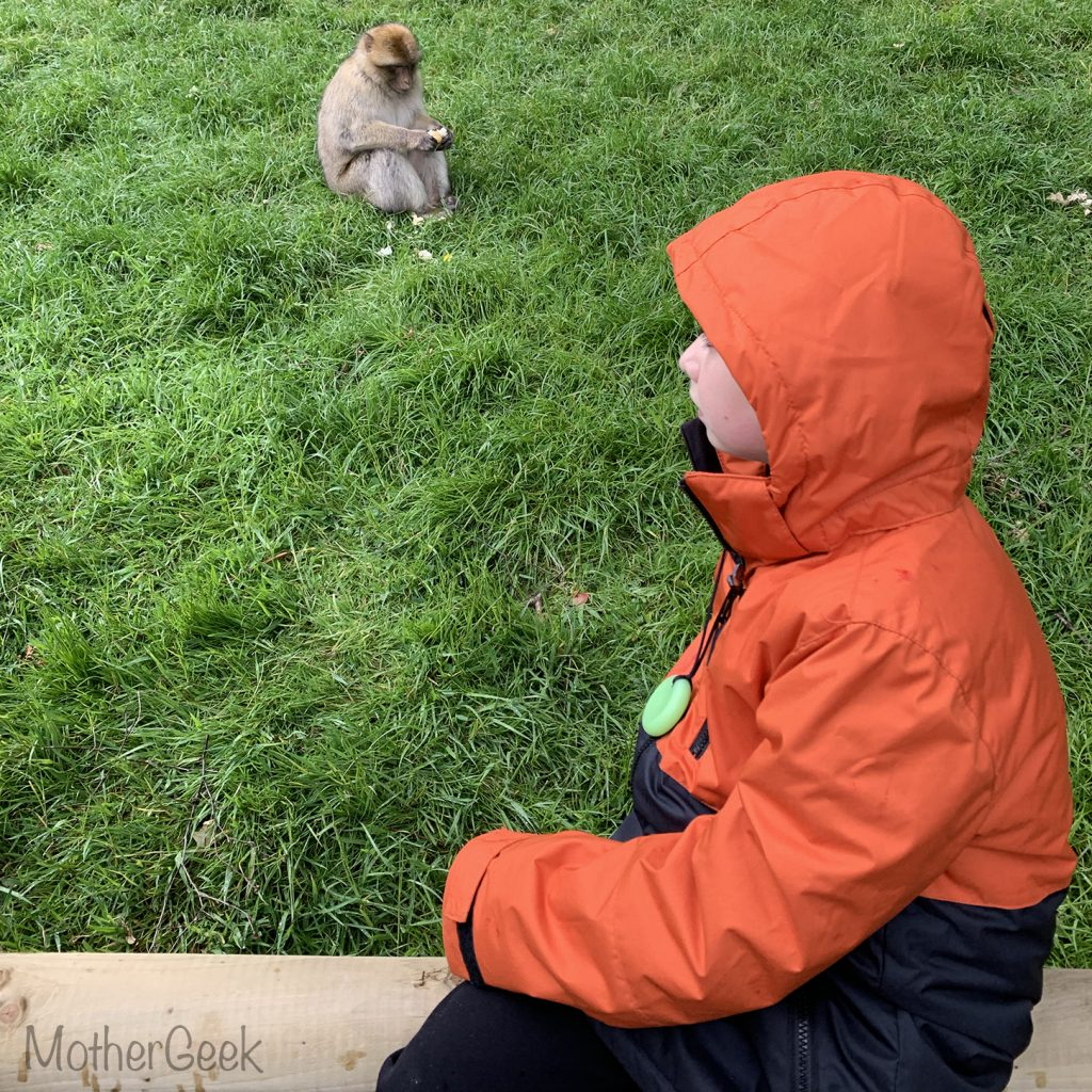 boy watching monkey