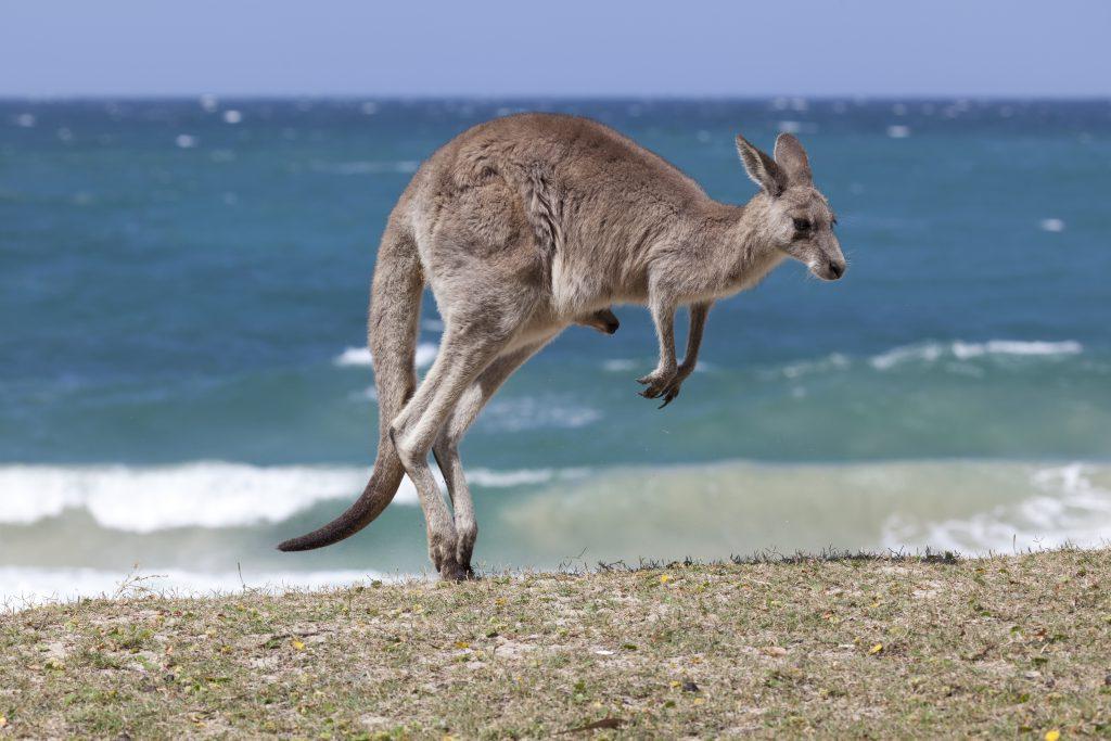 Lucky Bay - Family Guide to Australian Beaches