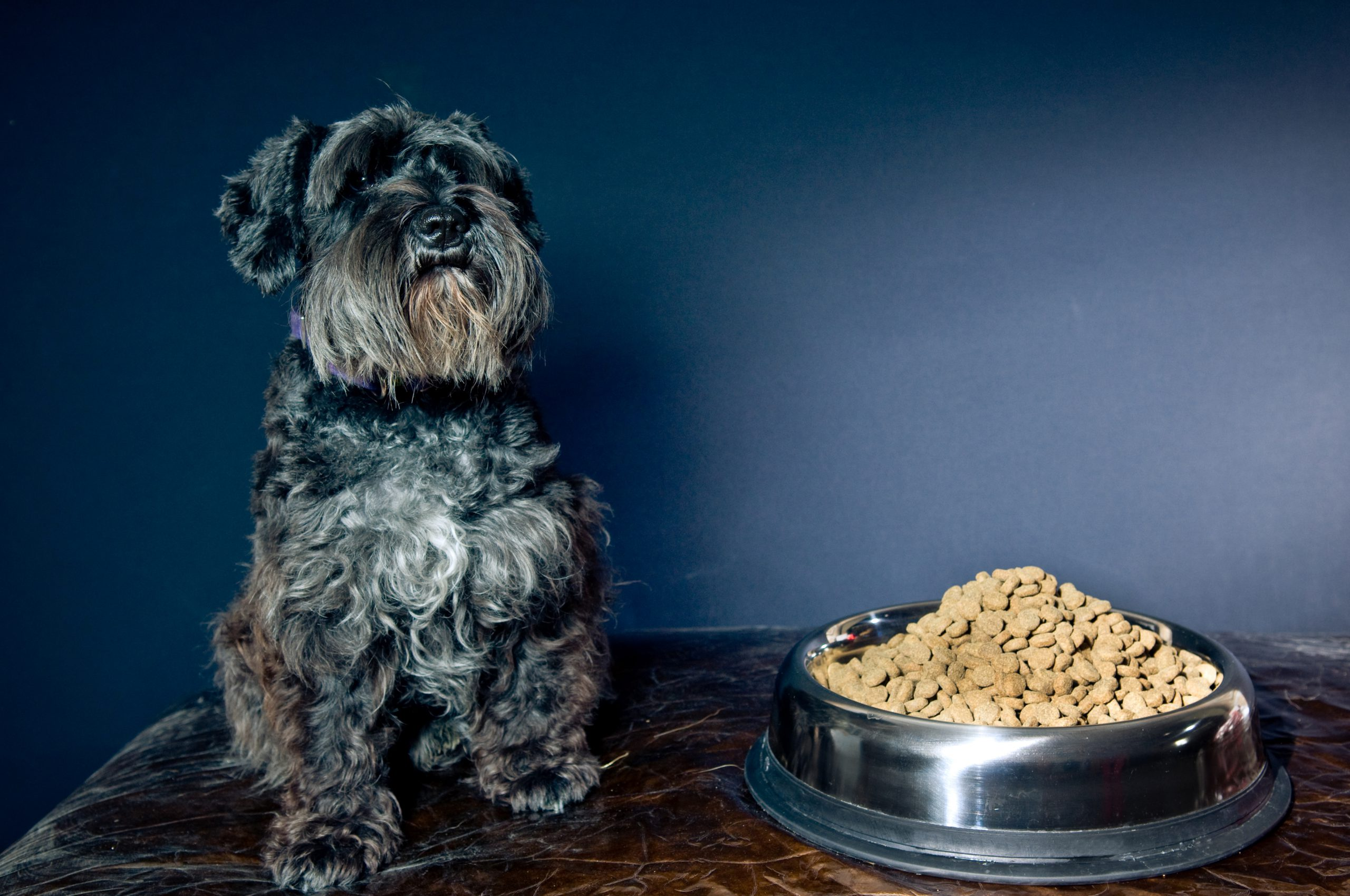 dog with kibble