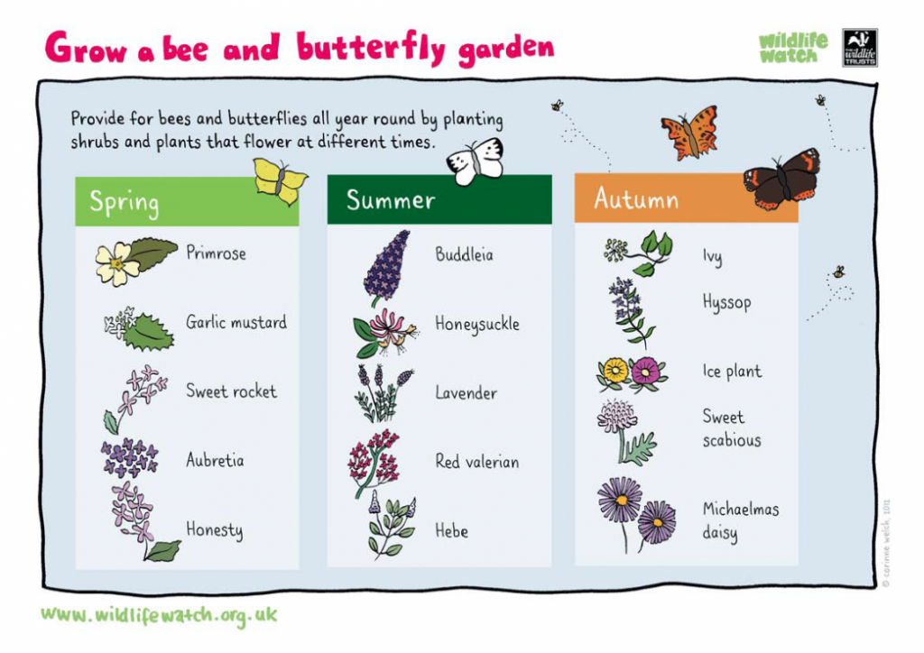 how to make your garden Bee friendly - a list of plants to grow in each season