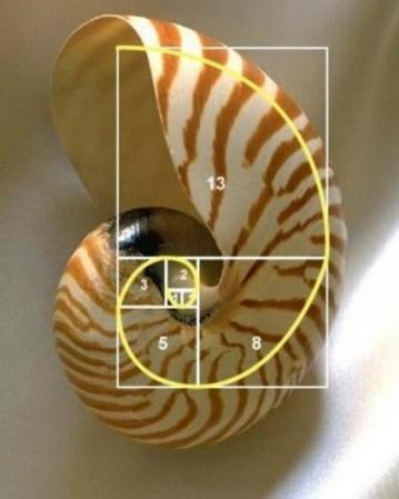 The Golden Ratio - Fibonacci in Nature