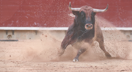 A Bull Running Around the Arena: How to Avoid Bull Traps