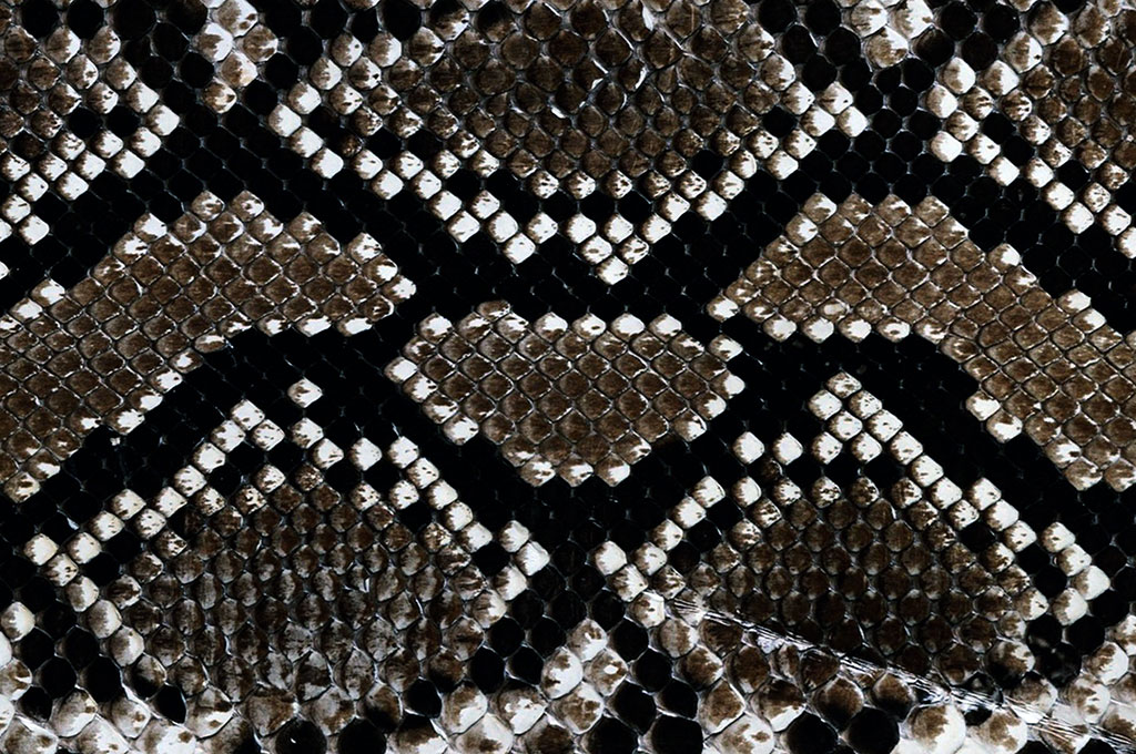 Dark patterns   close up of snake skin