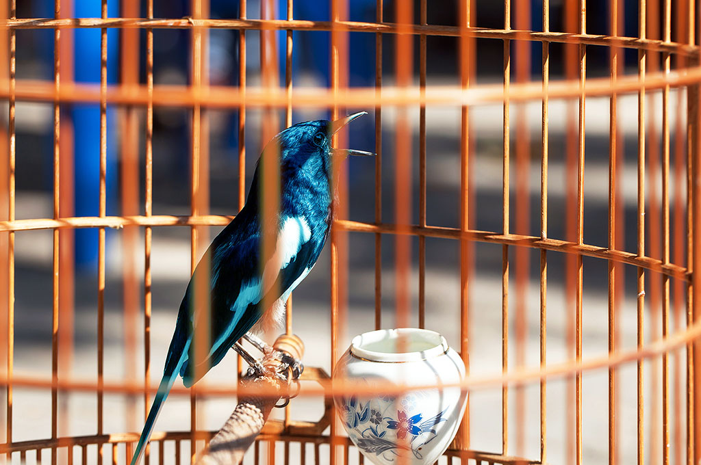 Caged blue bird representing restrictions on tweeting