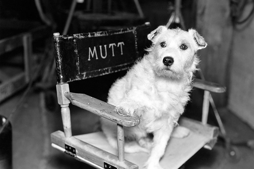 Dog in film director's chair