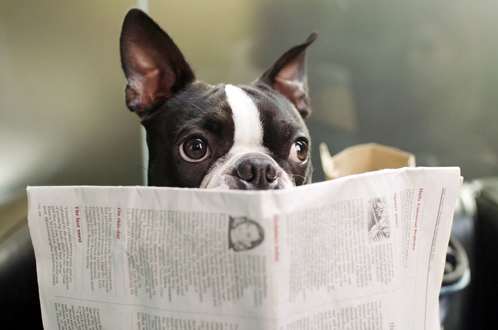 Bow reading newspaper