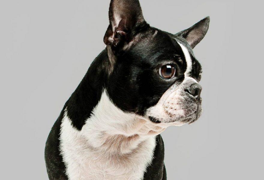 Coreco marketing dog