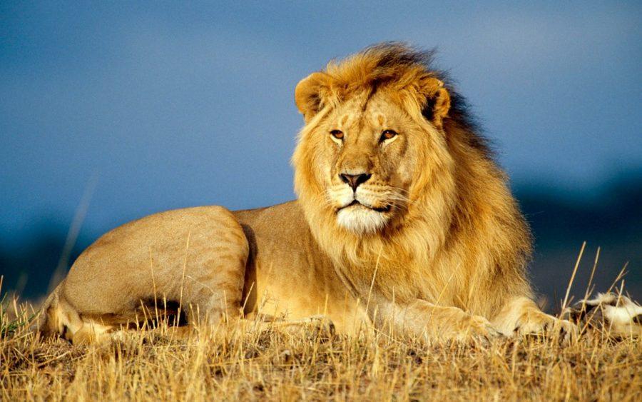 Lion kills woman at refuge of South African 'lion whisperer'