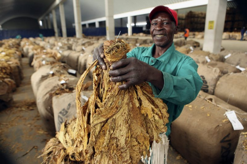 Zimbabwe rakes in $64.4 million in tobacco sales