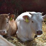 Govt pledges dipping chemicalsafter $4.3 billion livestock loss