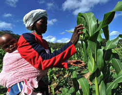 Command agriculture way to go for Zimbabwe, all of us must support government's programme