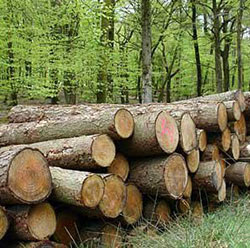 Border  Timbers ordered to reinstate workers