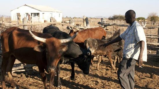 Foot n mouth ban lift boosts beef industry
