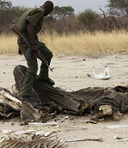 Government secures $6m for the rehabilitation of Hwange National Park