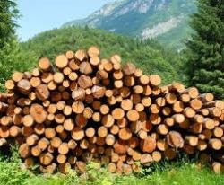 Experts say timber industry has regressed 25 years due to the govt's land grab exercise