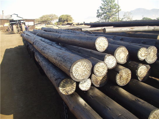 Border  Timbers narrows losses to $4,3mln, eyes regional market to boost recovery