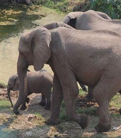 Zimbabwe raises $1 Million from sale of elephants to China