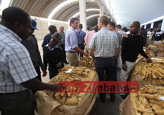Tobacco sales, exports up despite drought