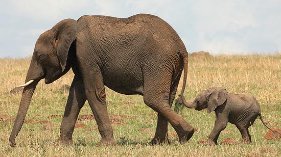 Zimbabwe quietly sending its young elephants to China