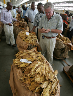 Tobacco output remains flat, prices seen depressed