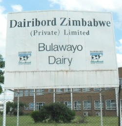 Dairiboard sinks to $4 m operation loss