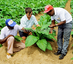 EU keen to see Zim agriculture booming, injects  $7m into the sector