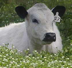 Command Livestock: govt appeals for $20m