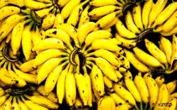 Exports  dwindle despite banana production increase