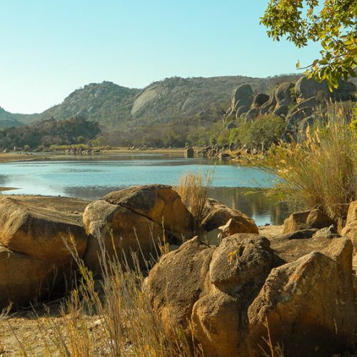 A birder's paradise in Zimbabwe