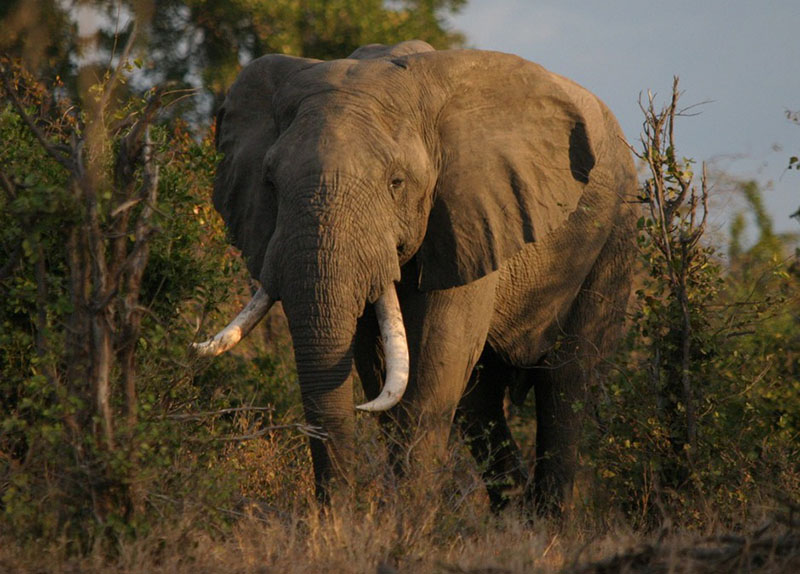 Seven Hwange elephants killed in suspected cyanide poisoning