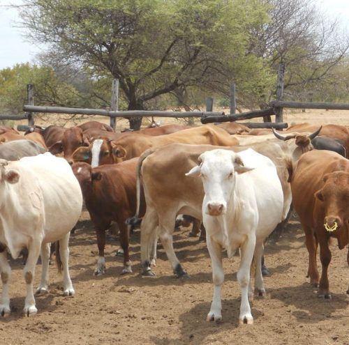 Man axes neighbour to death in row over missing cattle