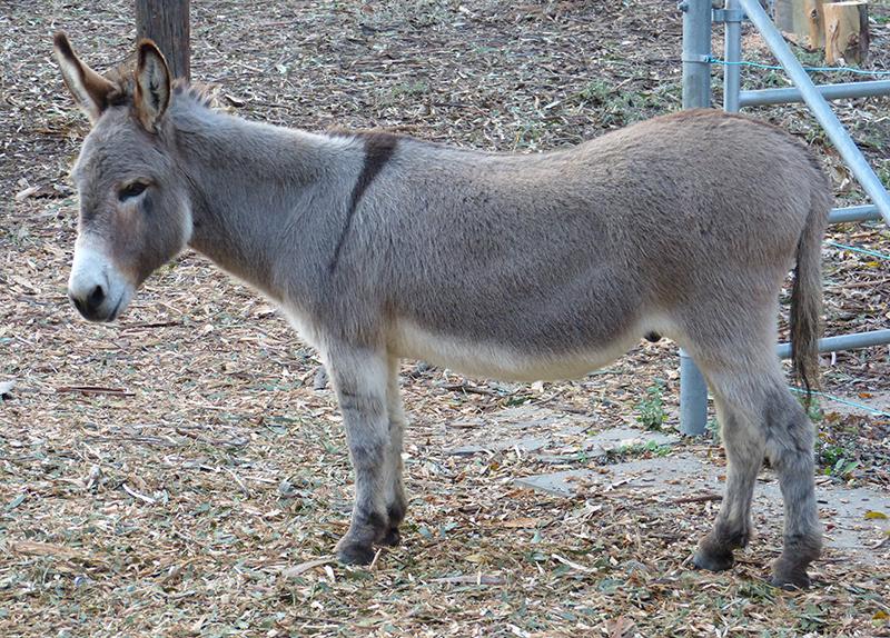Burundi angered by French gift of donkeys to village